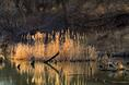 cattails_at_sunset.html