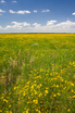 kansas_summer_flowers.html