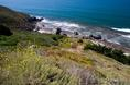 marin_flowers_and_coast.html