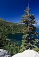 tahoe_tree.html