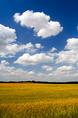wheat_and_clouds.html