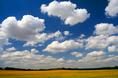 wheat_and_clouds_ii.html