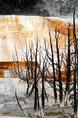 hot_springs_dead_trees.html