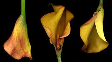 1 of 5 flowers