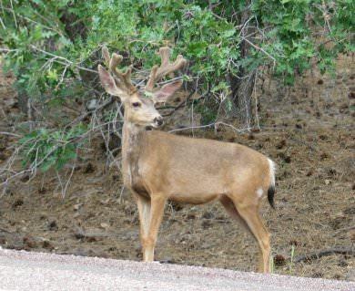 buck, July 2003