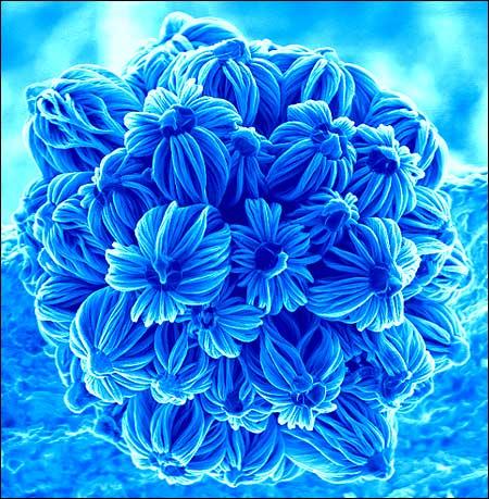 nano-flower