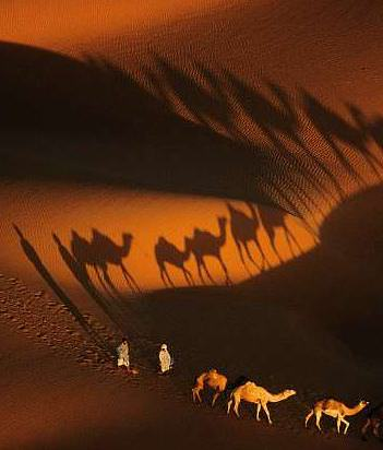 camels from the air
