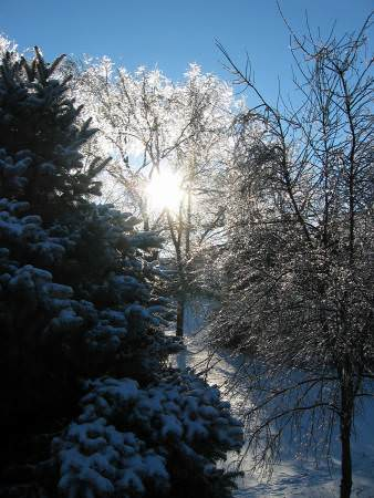 sun streaming through icy trees