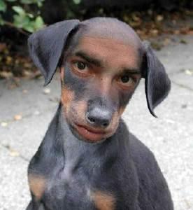 man puppy