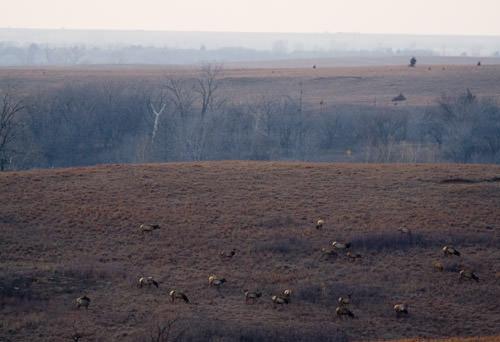Elk at Maxwell Park
