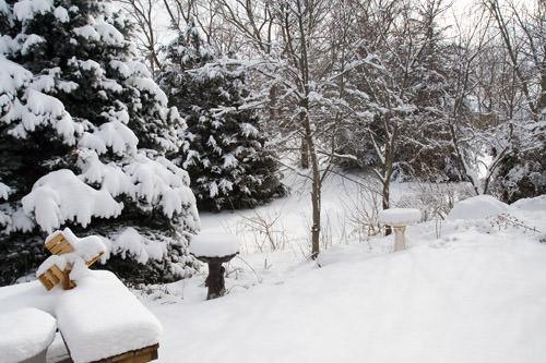 winter snow: back yard