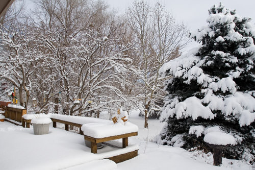 winter snow: back deck