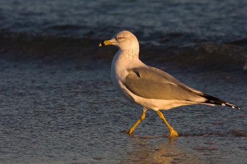 Galveston 2007/2008