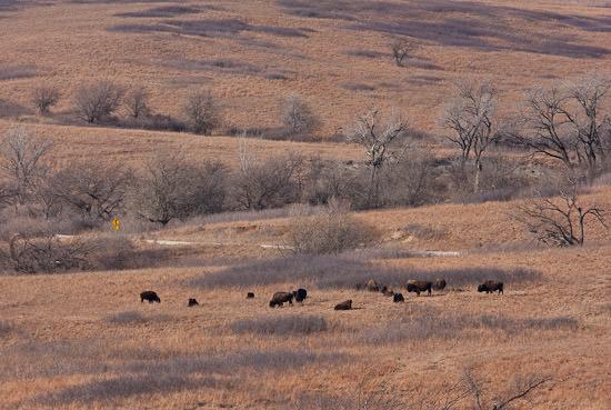 Kansas, early winter 2008-09