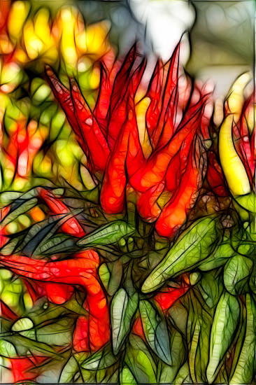 Colorful Peppers in Salina