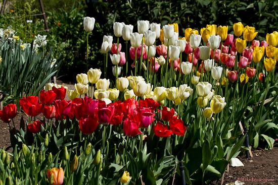 Spring Flowers, Gamble Center