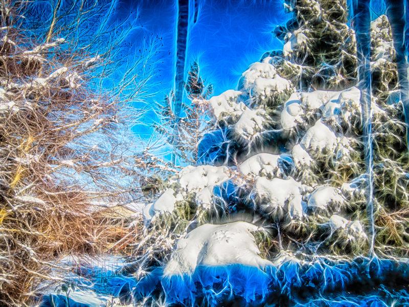fractalius spruce