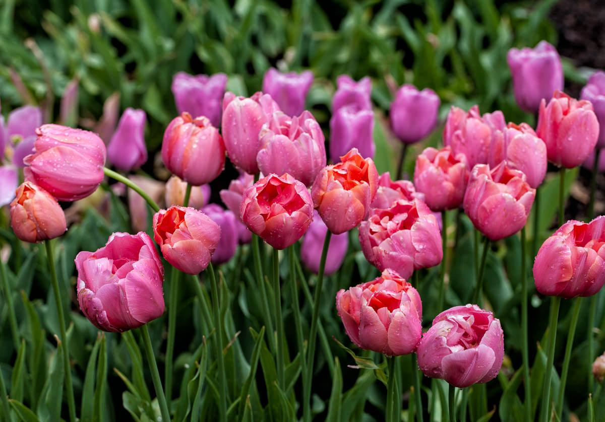 Palo Alto flowers