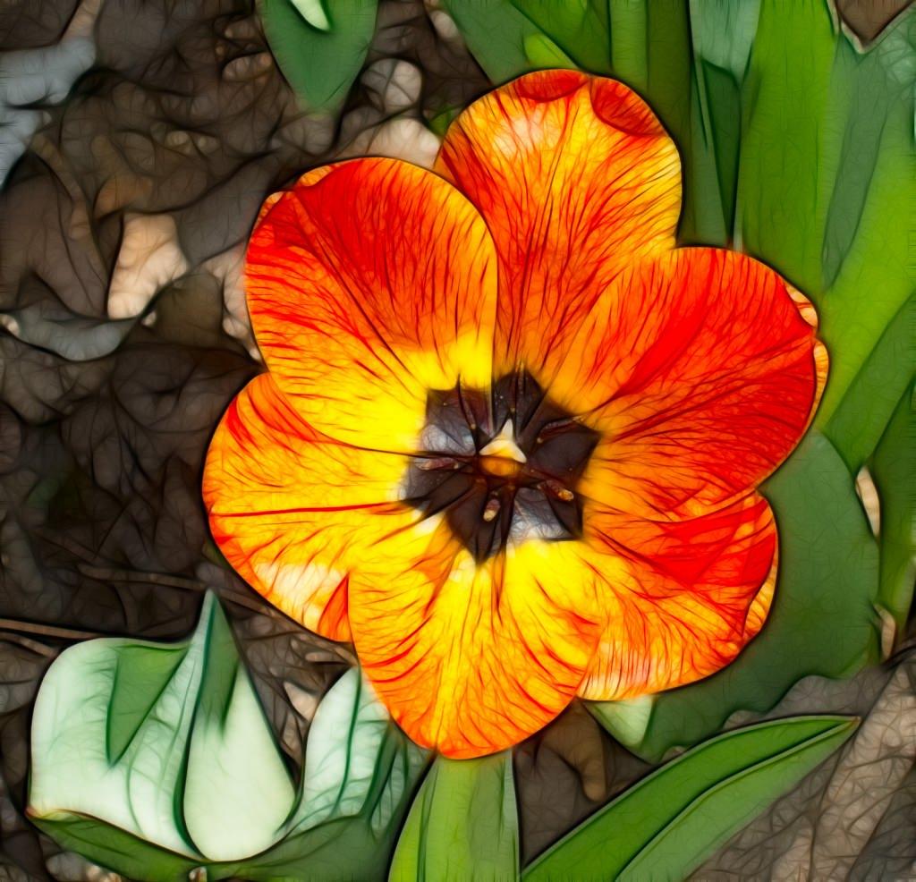 Fractalius Tulip