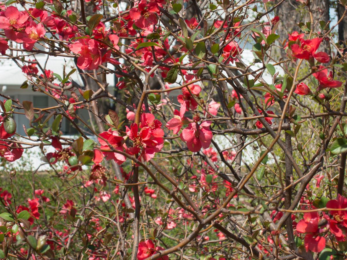 Kansas spring